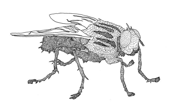 fly, insect, wings, illustration - ajsazdrav | ello
