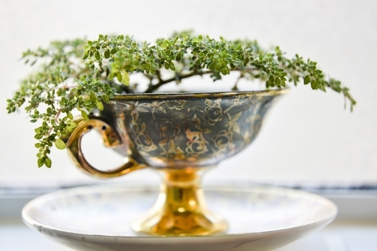 cup mini tree - photography, macro - tamisatrommer | ello