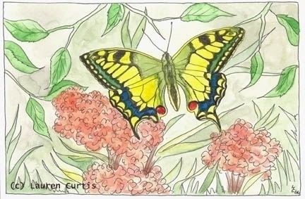 Watercolor butterfly Illustrati - laurencurtis | ello