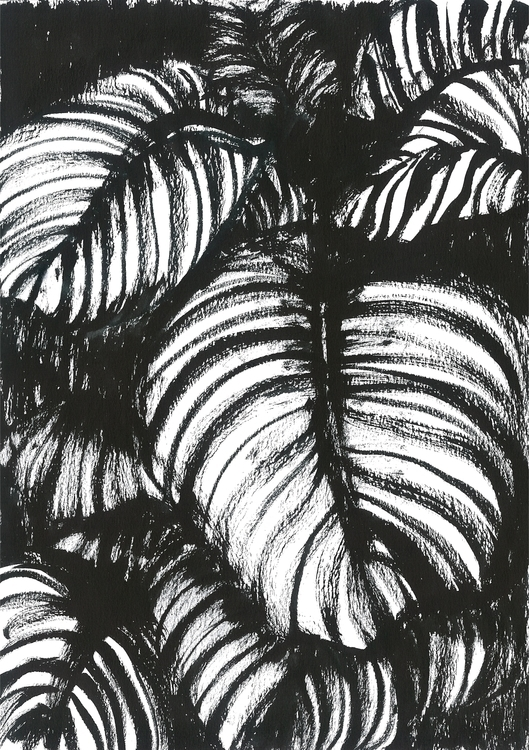 Hosta Plants. Chinese ink A4 Da - sijie_ng | ello