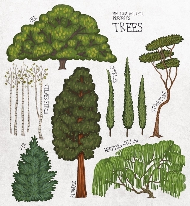 illustration, educational, trees - melissadelteil | ello