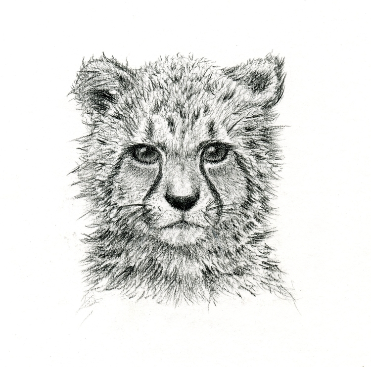 Contemplating cheetah - illustration - annkelia | ello