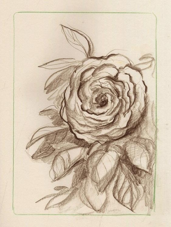 rose sketch location drawing - doodle - jessdrawz | ello