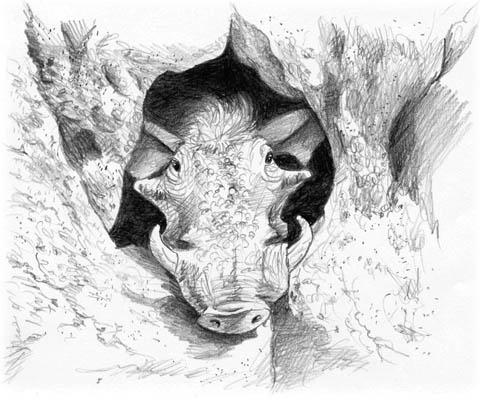 Warthog pencil illustration - animals - maryann-6495 | ello