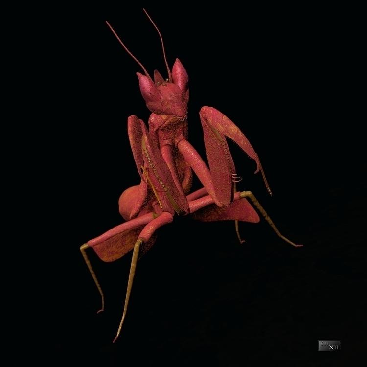 pink mantis, full c4d - 3d, cinema4d - eli_xii | ello