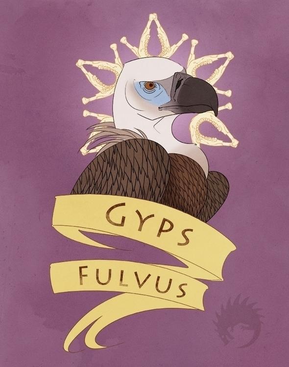 griffon vulture - illustration, drawing - reach-5958 | ello