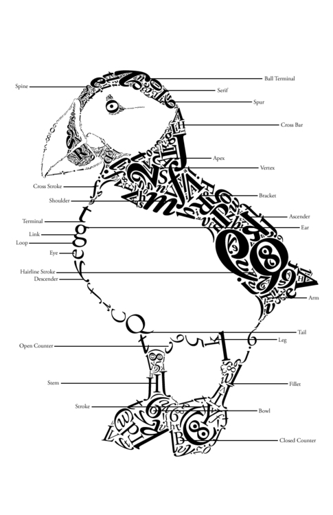 Labeled Typographic Puffin - design - jessicaredmond | ello