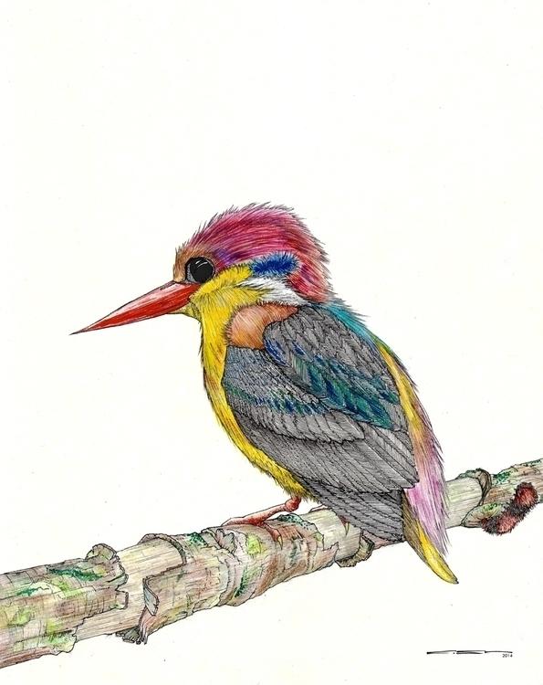 Kingfisher - illustration, bird - thecreativefish   ello
