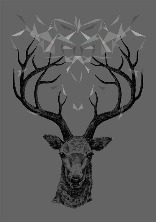 arctic evening - illustration, deer - tiririri | ello