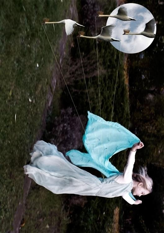fairytales, grimm, 12swans, swan - luisacatucci   ello