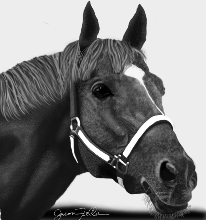 drawing famous race-horse Secre - jasonfella | ello