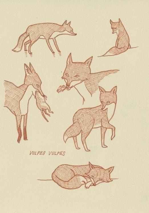 studies - vulpes - brushpen, pittpens - cat-8775   ello