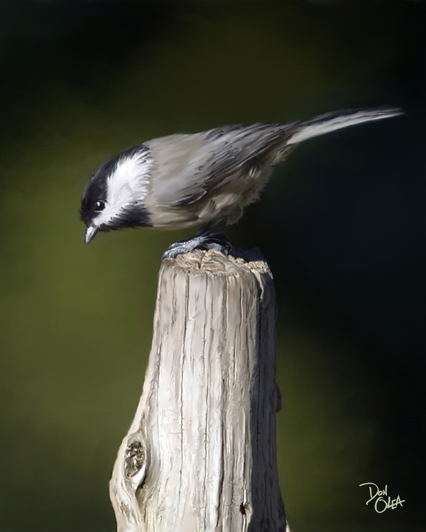 Carolina Chickadee - digitalart - donolea | ello