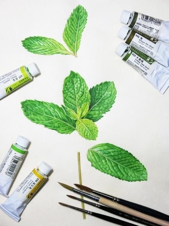 Mint - herb, botanicalart, botanical - karenkluglein | ello