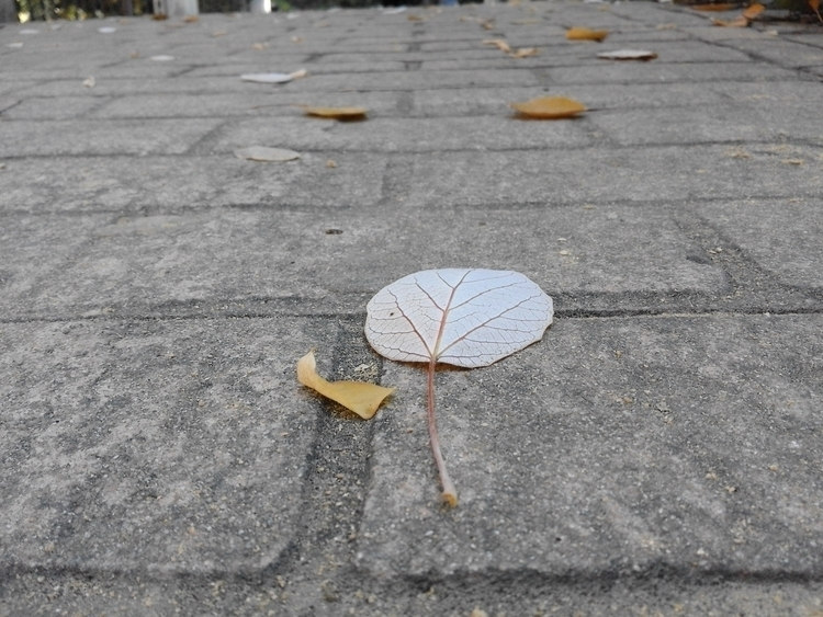 Hojas de Otoño - leaf, hoja, stroll - sao-5808 | ello