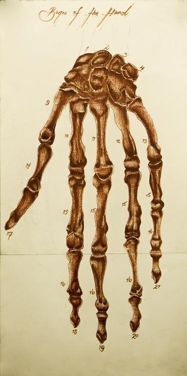 Anatomy Hand - medicalillustration - aliziagonzalez | ello