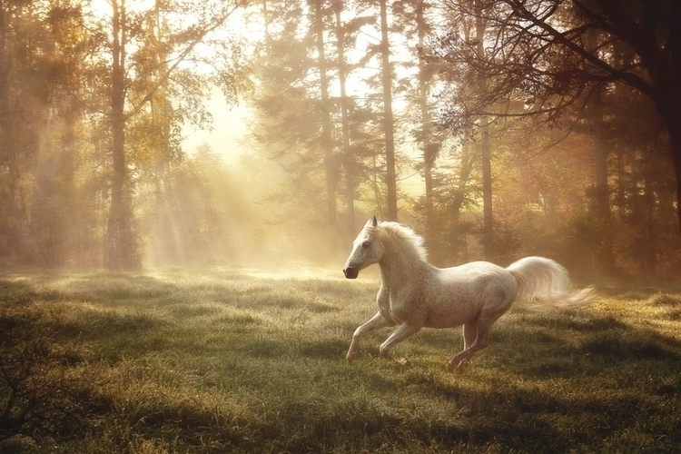 Dreamland Canter - photomanipulation - janneo-1422 | ello