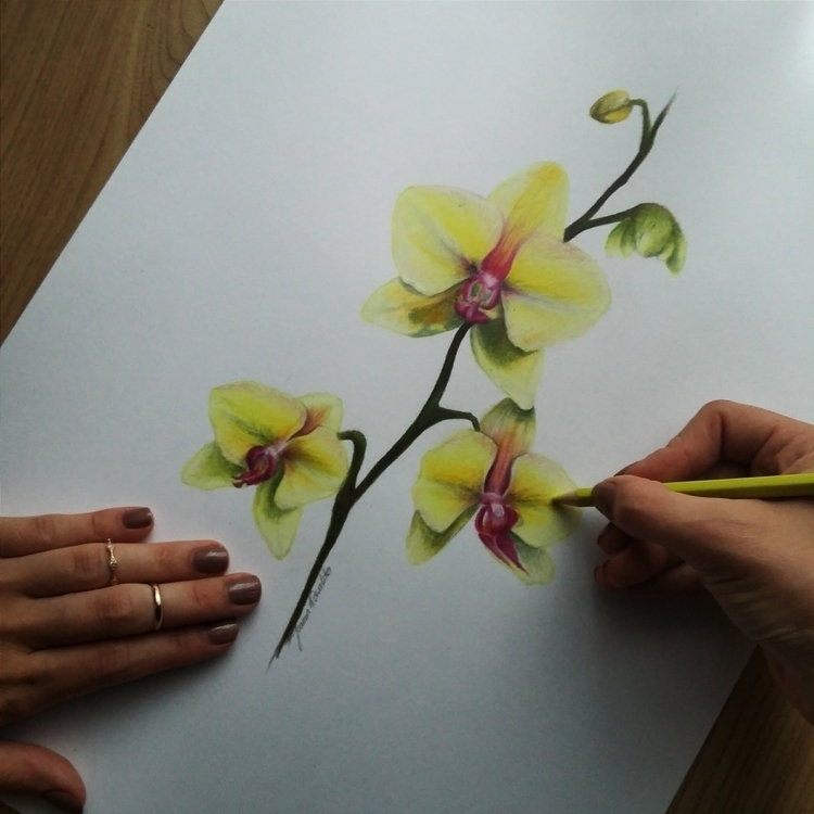 Orchids Faber Castell Eco color - joan95 | ello