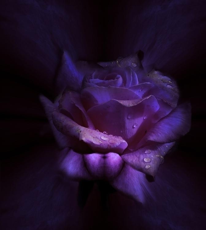 DEW - flowers, roses, digital, abstract - carmenvelcic | ello