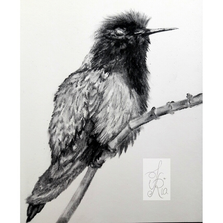 Bird VI - drawing, charcoal, birdie - fariafiroz26 | ello