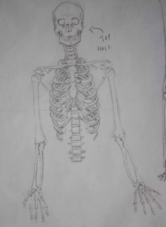 Skeleton - illustration, drawing - mhettich   ello