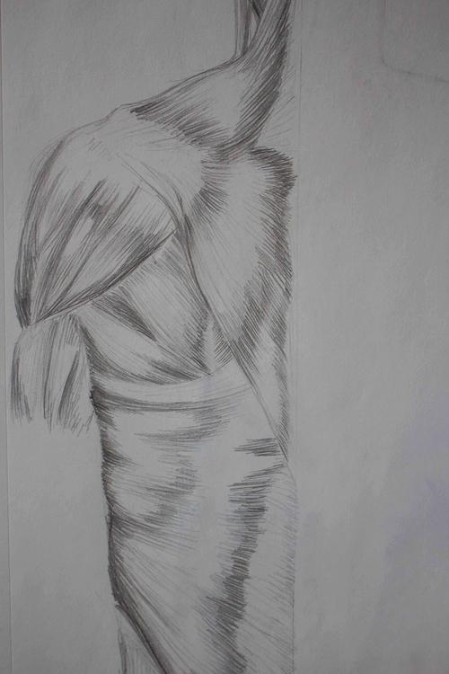 Torso Muscles - illustration, drawing - mhettich | ello