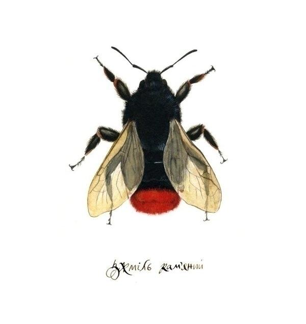 bumblebee, watercolor, illustration - smugasta | ello