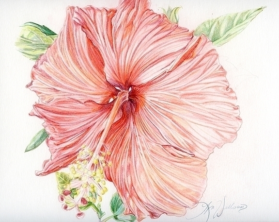 drawing, illustration - lyn-1488   ello