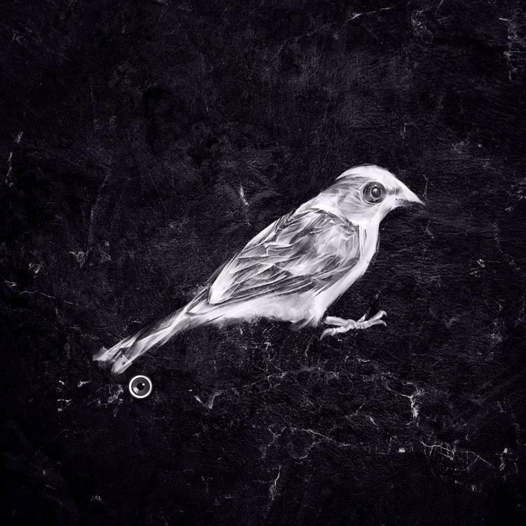 Sparrow - sparrow, blackandwhite - adamdunt | ello