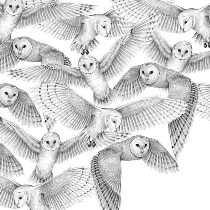 Extinction - Owls - carolewilmet | ello