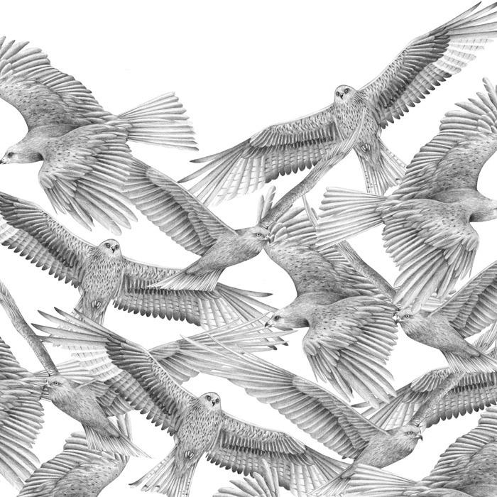 Extinction - Kites - carolewilmet   ello