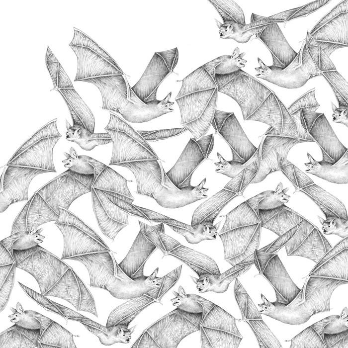 Extinction - Bats - carolewilmet   ello