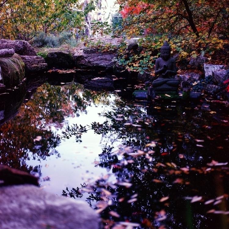 Buddha pond - photography, buddha - jacopocaggiano | ello
