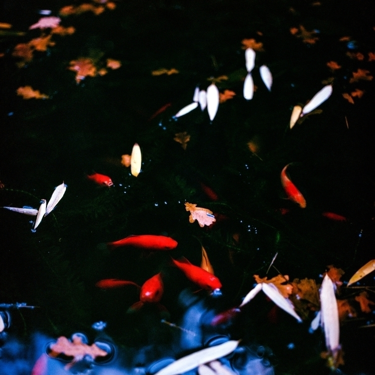 Red fishes water - photography, japan - jacopocaggiano | ello
