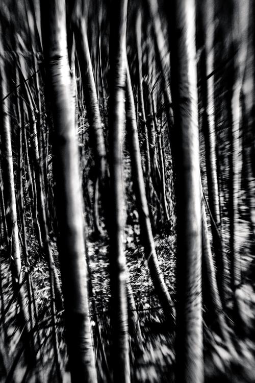 Ghost Poplars | Danie Bester So - daniebester | ello