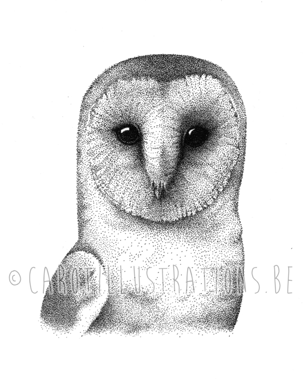 Owl dotwork - illustration, owl - carotillustrations | ello