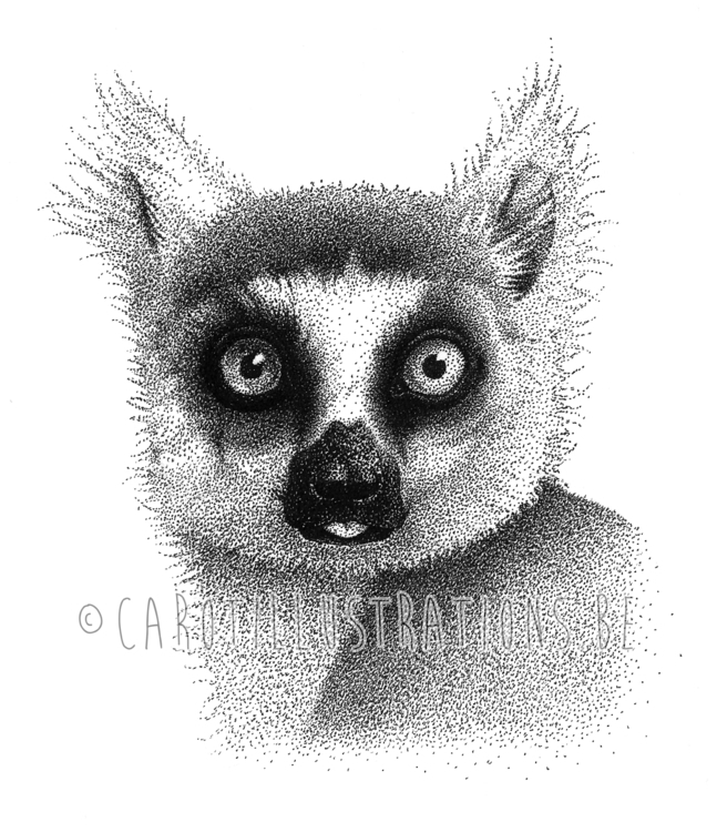 Lemur dotwork - lemur, blackandwhitedrawings - carotillustrations | ello