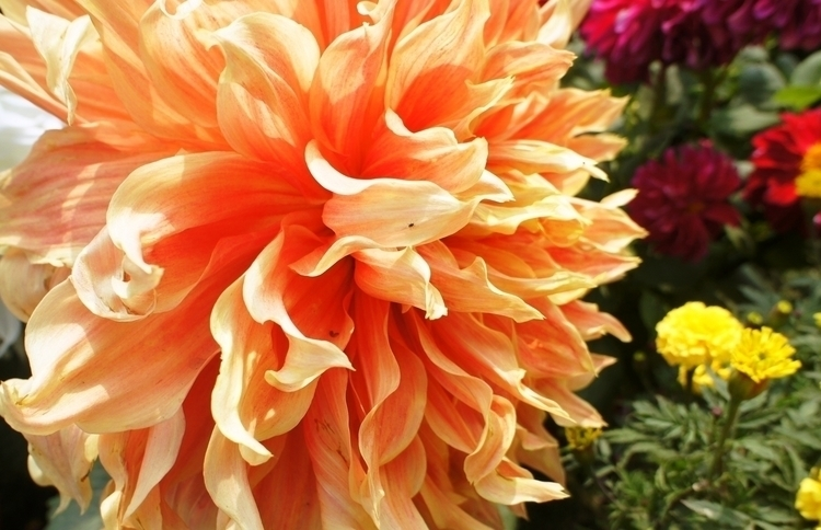 LOVE FLOWERS - photography, flowers - baljitchadha | ello
