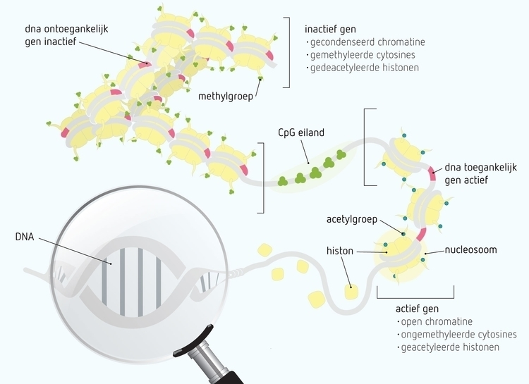 DNA methylation - illustration - pixelpakhuys | ello
