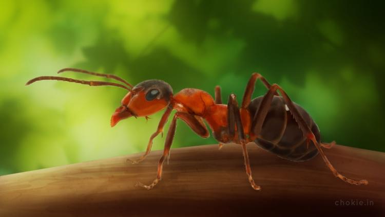 Ant - Digital Painting - illustration - chokie | ello