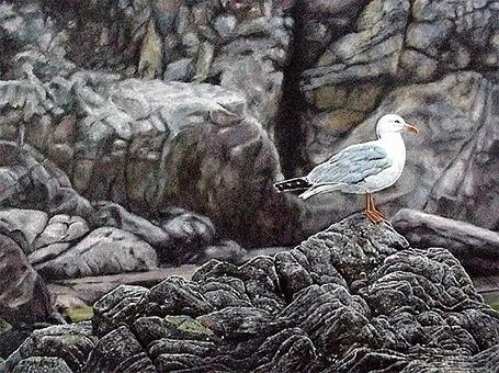 Seagull - ziyae | ello