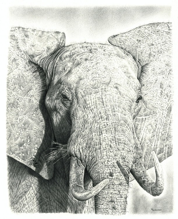 Elephant pencil drawing - elephant - remrov | ello