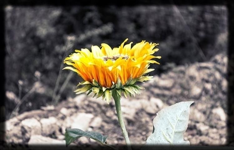 Flower - eliacecconello | ello
