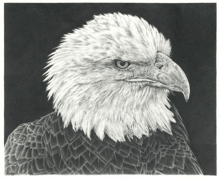 Bald Eagle drawing - eagle, baldeagle - remrov | ello