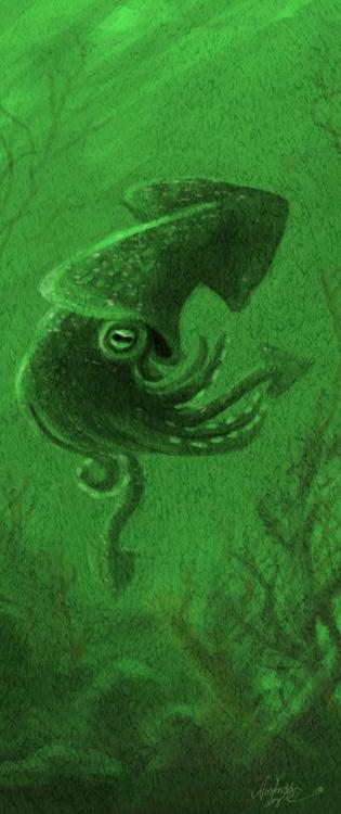 squid, teuthidae - amandaloyolla | ello