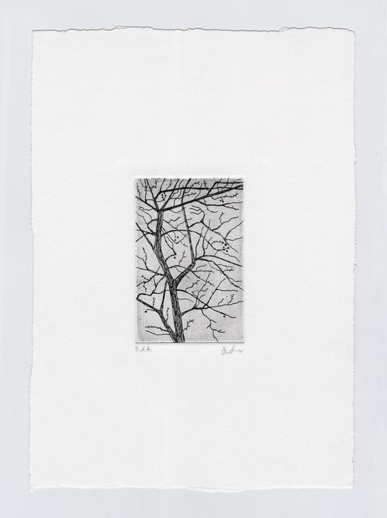 Copperplate etching tree copper - ariautas   ello