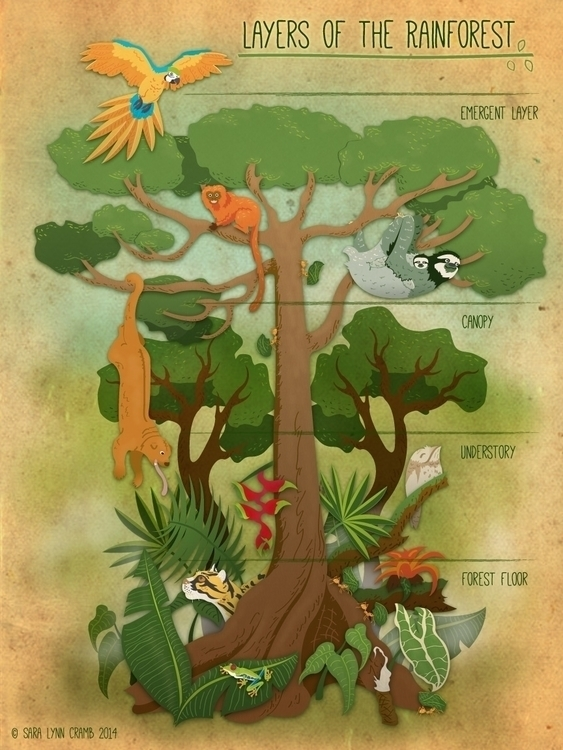 Layers Rainforest - rainforest, animals - saralynncramb | ello