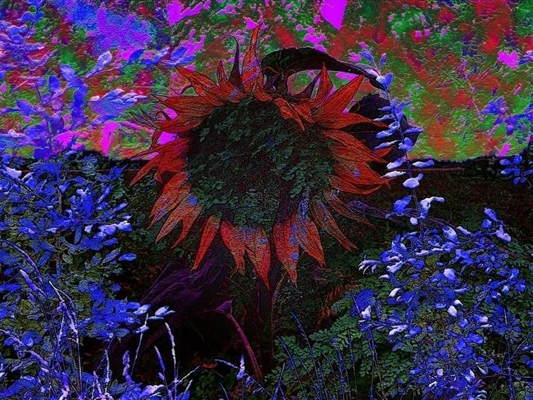 bushflower - digitalart - joachimwilbers | ello