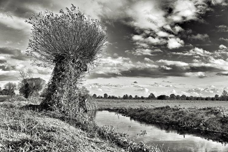 Wild Willow - willow, willowtree - cliveayron | ello