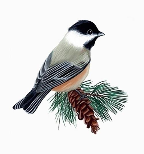 Beautiful Bird - illustration, painting - marfandosart | ello